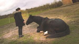 Tierpädagogisches Angebot mit Pferden