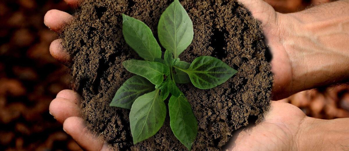 Nachhaltigkeit und Umweltbildung